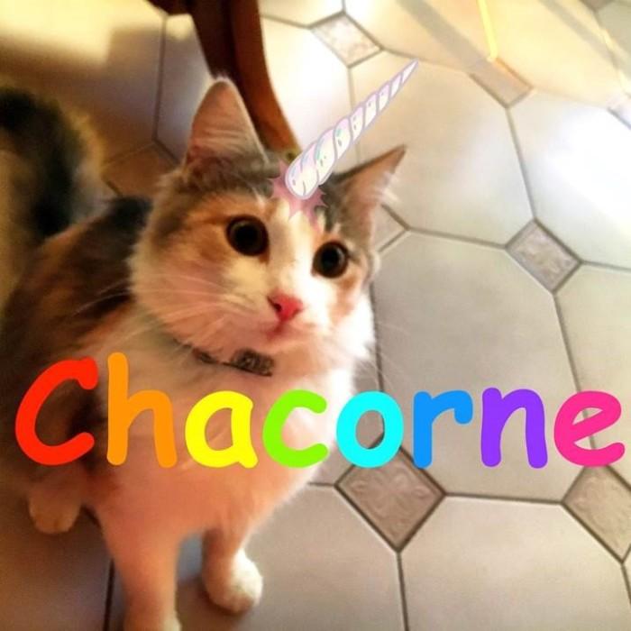 chacorne